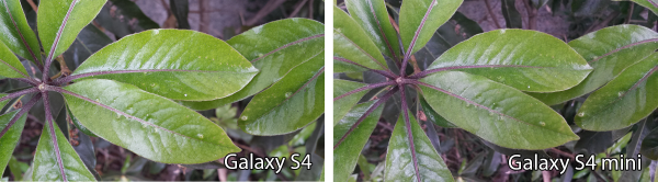 Photos from the Samsung Galaxy S4 and Galaxy S4 mini compared